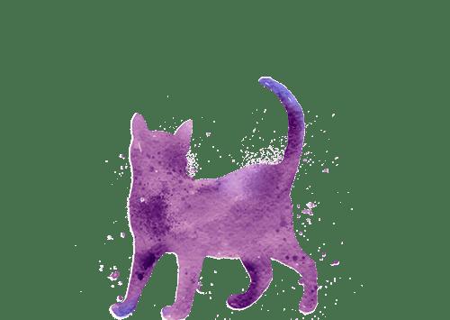 איור חתול - סדנאות - שפה אחת המרכז לתקשורת עם בעלי החיים